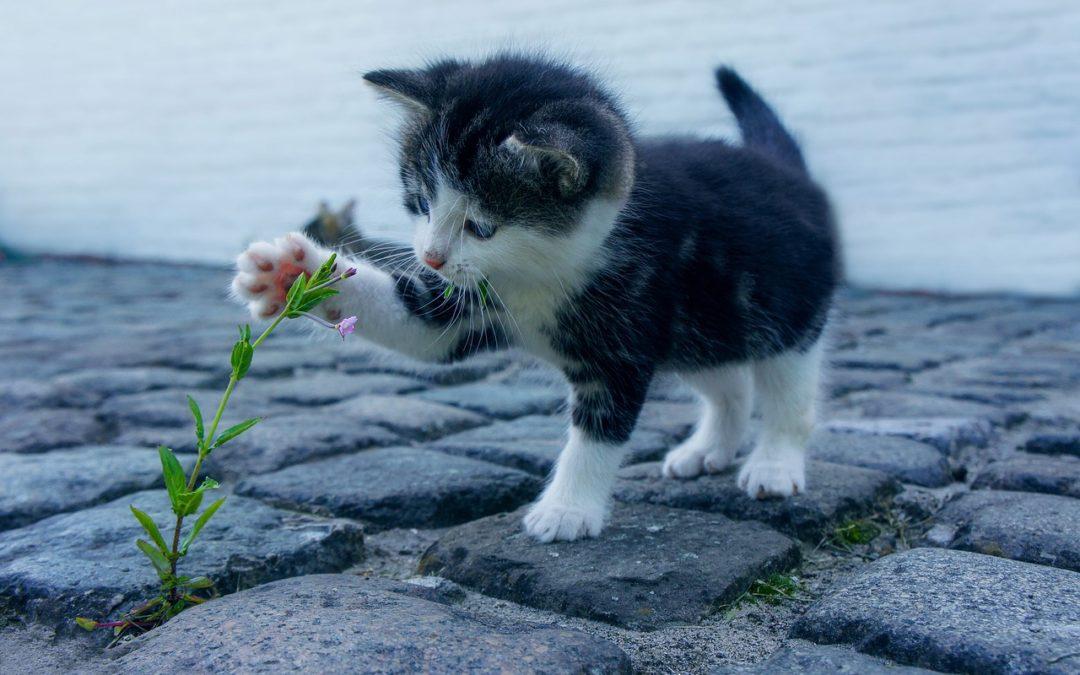 Identification et stérilisation obligatoire des chats